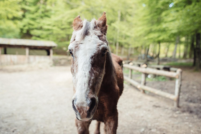 Das älteste Pferd Kroatiens!