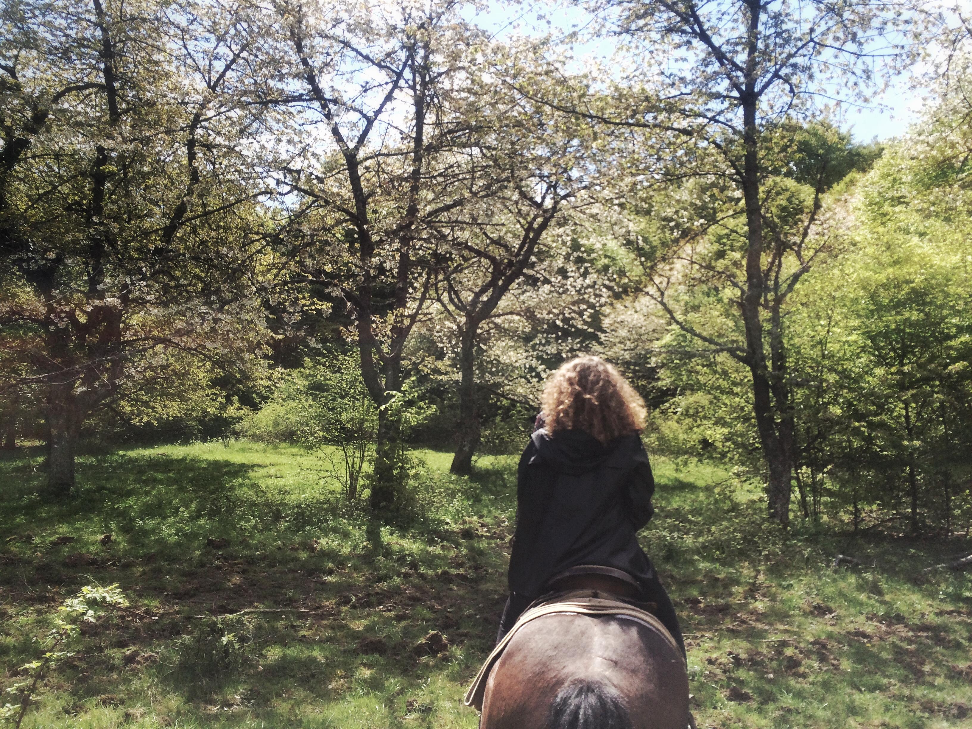 FullSizeRende pferdr